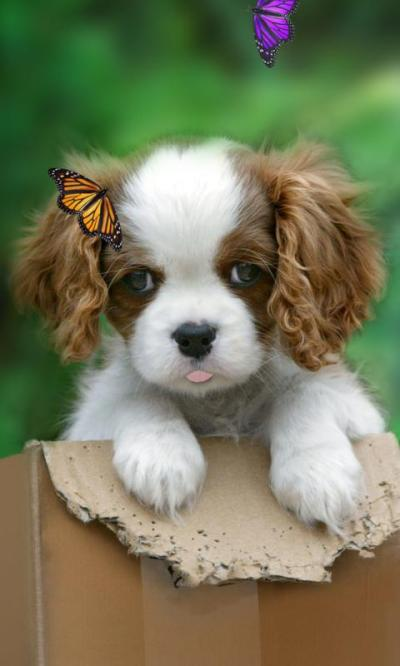 Cute puppy live wallpaper - Android Apps on Google Play