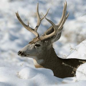 Download 3D Deer-Nature Live Wallpaper Google Play softwares - a7qMSV9nhHjI | mobile9