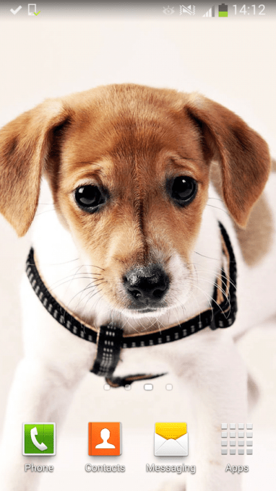 Cute Dogs Live Wallpaper - Android Apps on Google Play