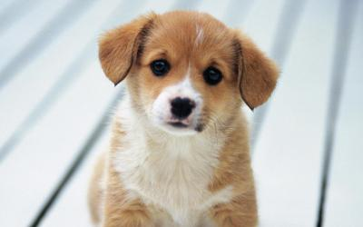 Puppy Live Wallpaper - Android Apps on Google Play