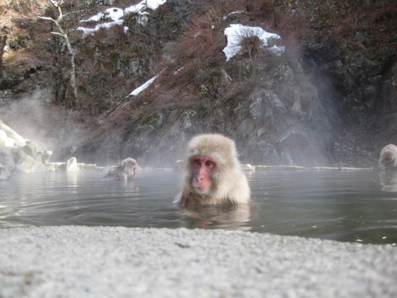 Monkey peeking out of the hot pool
