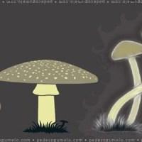 Os diferentes tipos de cogumelos