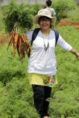 kebun organik sadaya farm