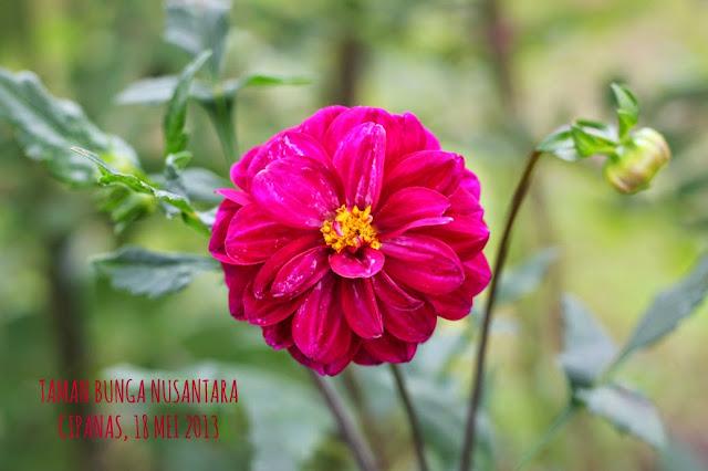 Taman Bunga Nusantara Cianjur