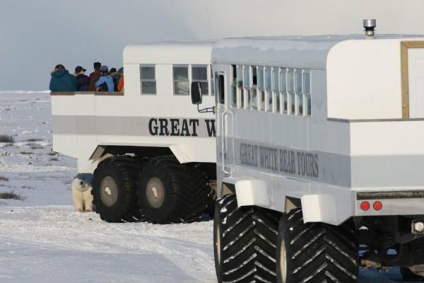 Ein Eisbär nähert sich neugierig einem Tundra-Buggy