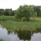 The pond on the west side.