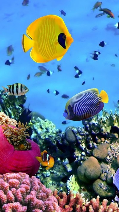 Ocean Fish Live Wallpaper - Android Apps on Google Play