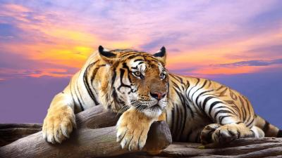 Wild animals Live Wallpaper - Android Apps on Google Play
