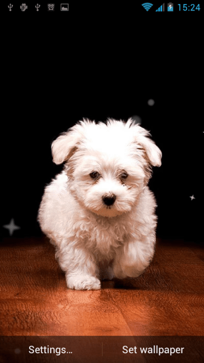 Puppy Live Wallpaper - Android Apps on Google Play
