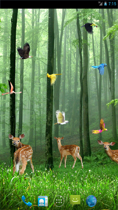 Rain Forest Live Wallpaper - Android Apps on Google Play