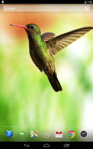 Download Hummingbirds Live Wallpaper for PC
