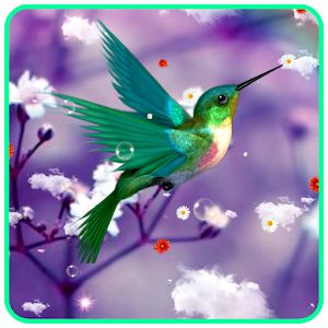 Download Humming Bird Live Wallpaper for PC