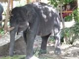 Baby Elephant-3.JPG