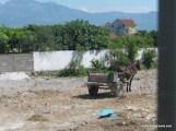 Horse & Cart-2.JPG
