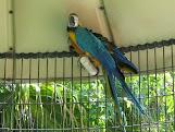 Caged Wildlife - Fort Lauderdale-1.JPG