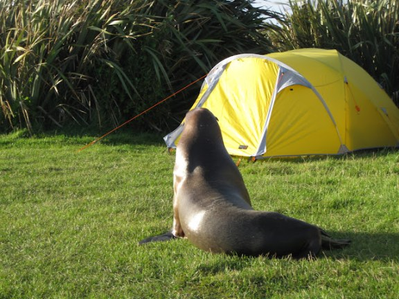 Camping in the Catlins