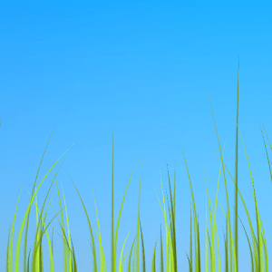 Grass live wallpaper APK for Blackberry | Download Android APK GAMES & APPS for BlackBerry, for ...