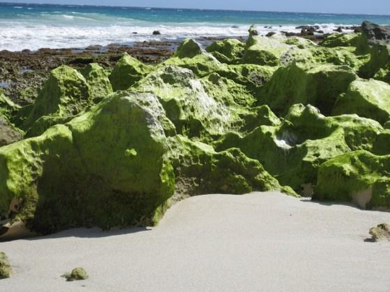 Limestone rock formations - Deepdene Beach - Cape to Cape Track