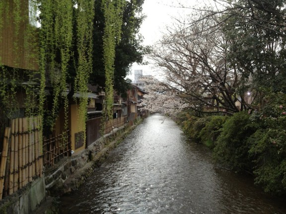 Cherry blossoms along the river in Gion, Kyoto