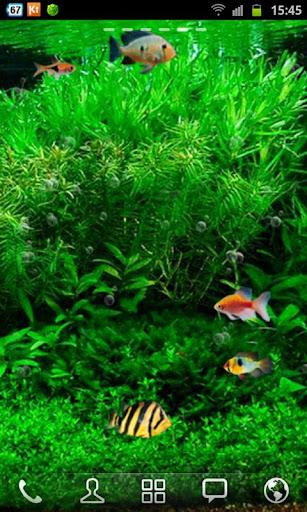 Update Fish Tank 3d Live Wallpaper apk New Version | Gogo Apk