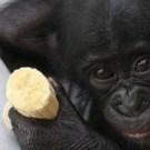 bonobos-le-film