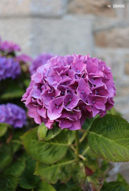 brehat-fleurs-02-by-libelul