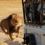Cecil The Lion Was a Deadbeat Dad, Had Violent History Of Attacking Others