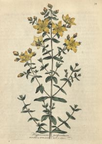 Discover medicinal plants and their uses