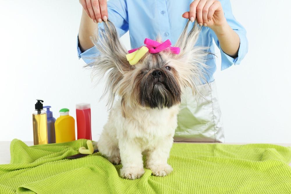 Cuponatic estudio mascotas