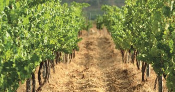 vineyard-corridor-view