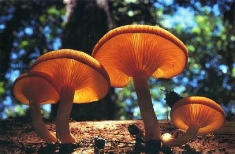 depth-of-field-mushroom