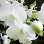 Orkidéer i massor och Äntligen lite shopping