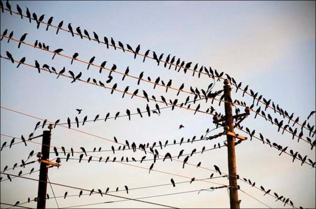 birds on wire 01