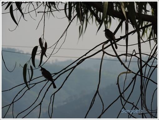 Coonoor Dawn