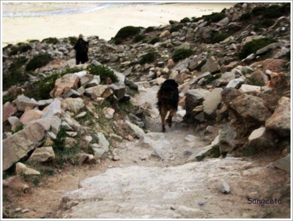 Kailash Parikrama - Black Dog