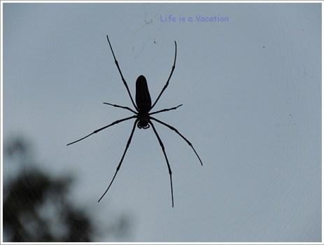 One-Spider-Dubare