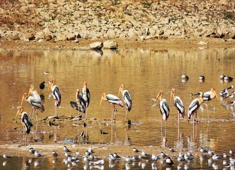 Bhuj Hamirsar Lake