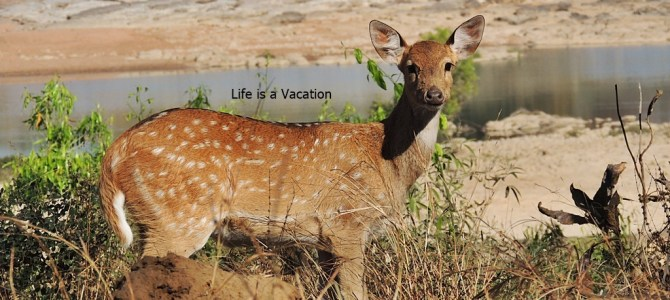 Day Out in Panna National Park and Pandav Falls