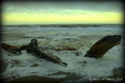 2 large pieces of driftwood, partially submerged by ocean waves, gray overcast, horizon in far distance