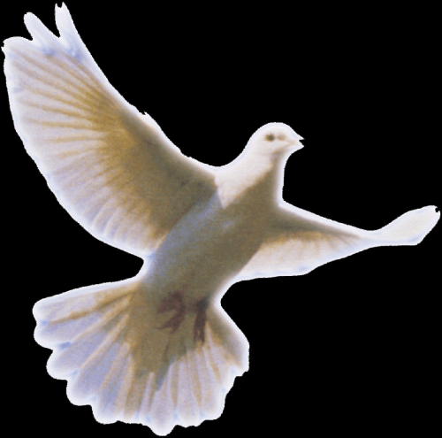 peace not anger