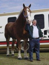 Priefert's Radar, Belgian gelding, who was tallest horse from 2006 - 2009