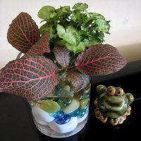 Цветы и растения в гидрогеле - мнения и отзывы
