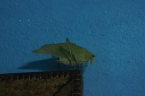 Critters of Nicaragua