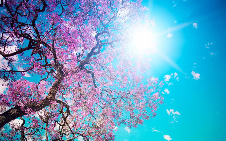 Sfondi-primavera-HD-fiori-di-pesco