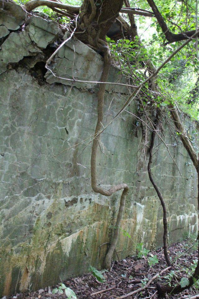 10-sept-16-wild-root