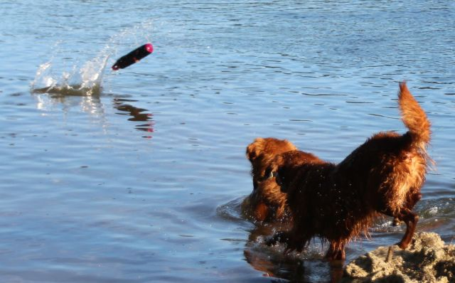 14-sept-16-time-to-fetch