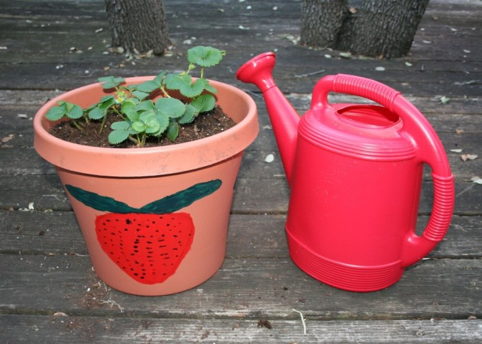 Image shows a watering can with a sieve nozzle next to a pot filled with strawberry plants.