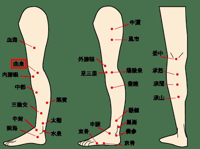 肝臓の働きを助けてくれる膝のツボ曲泉