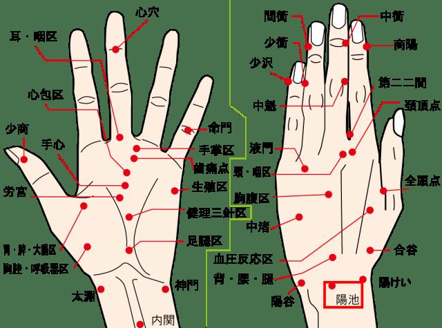 手の甲にある肝臓効くツボ陽池