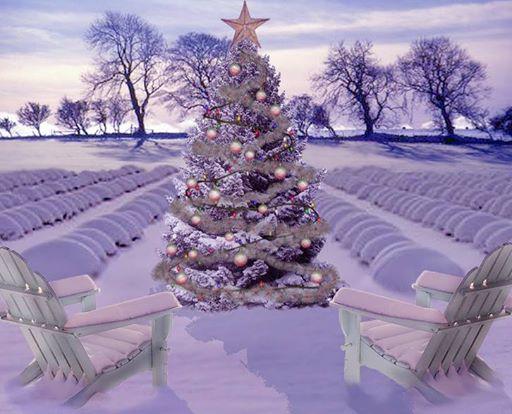 Natale alla lavanda Venzone (UD) Friuli